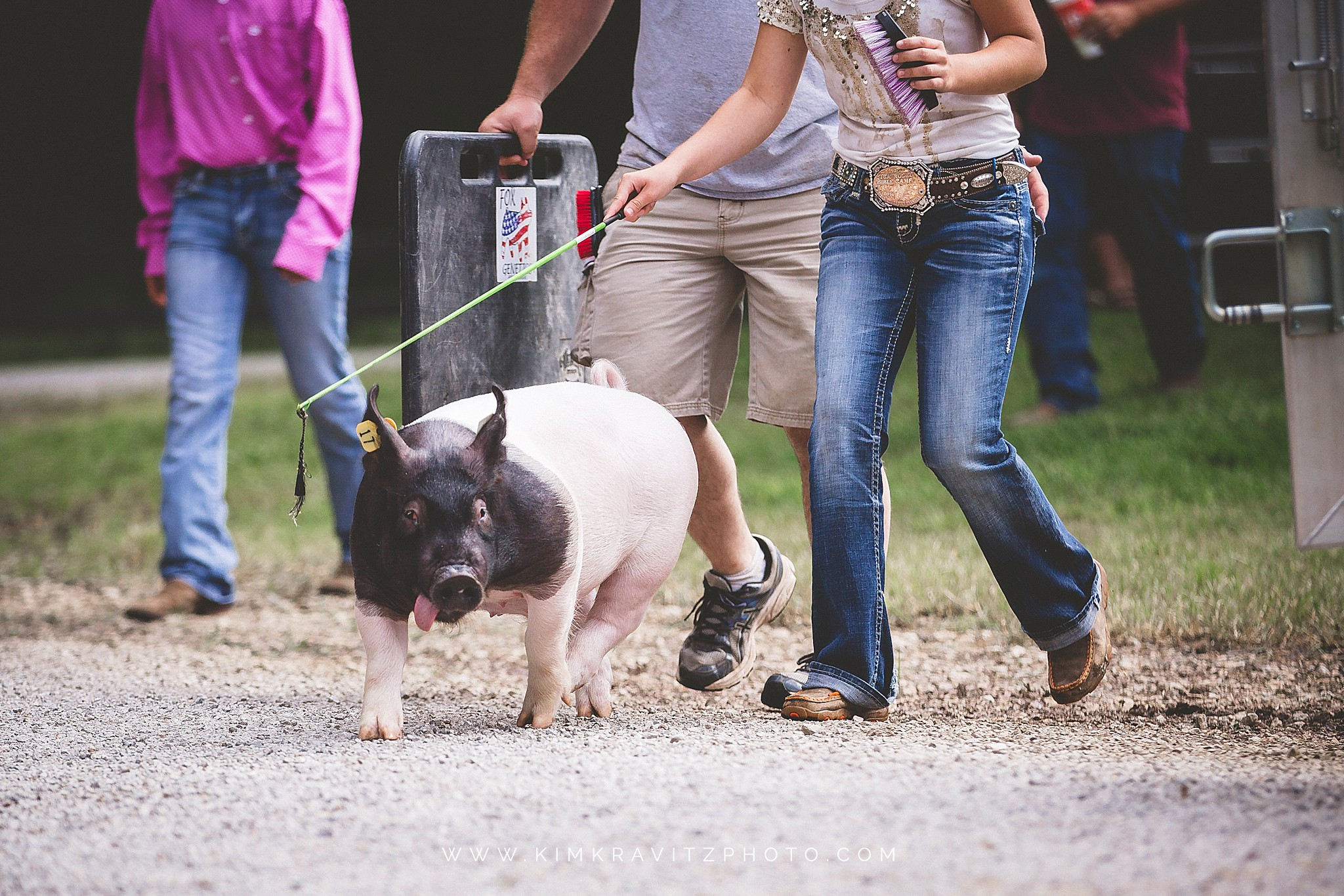smiley the pig at the crawford county livestock show